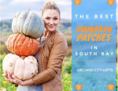 Pumpkin Patches in South Bay